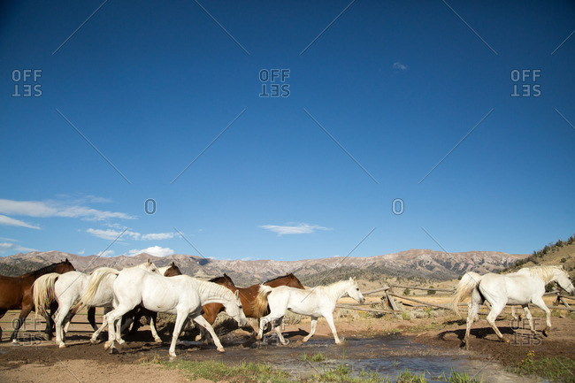 Herd of horses in corral with mountain range in background