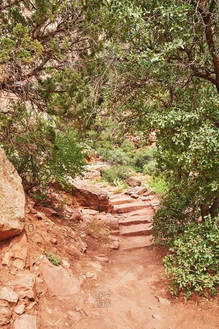 Wooded hiking trail in Zion National Park, Utah