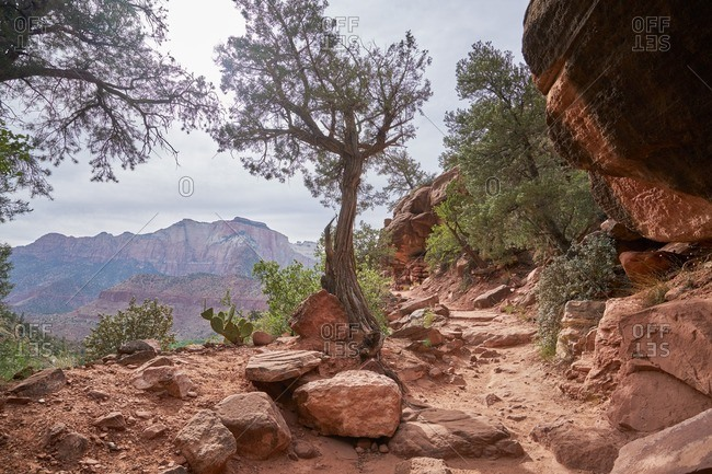Rocky outcropping in Zion National Park, Utah