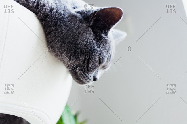 Close-up of a cat napping