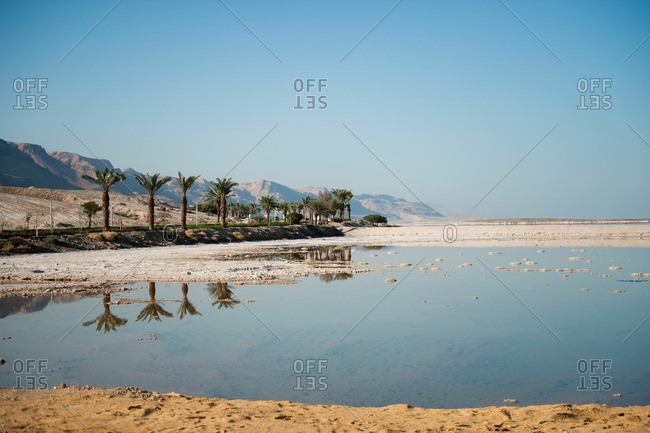 Palm trees along the shore of the Dead Sea in Israel