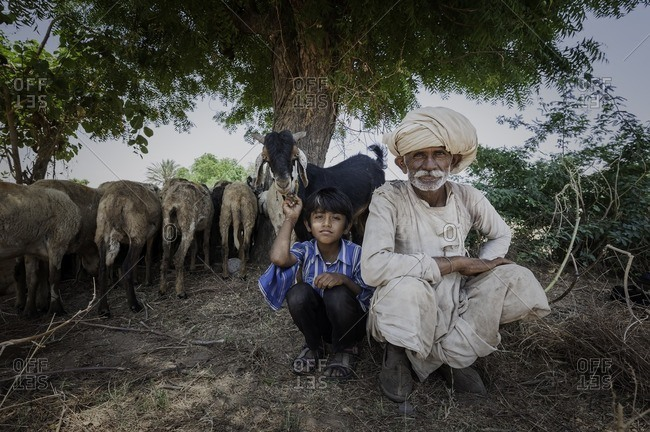 Gujarat, India - May 6, 2016: Indian man and boy with goats