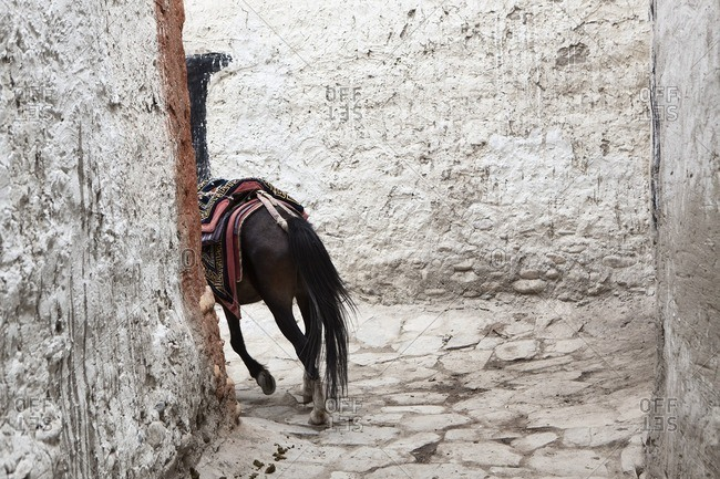 A horse is led through the alleyways of the Royal City in Lo Manthang, Nepal in preparation for the Yartung Festival