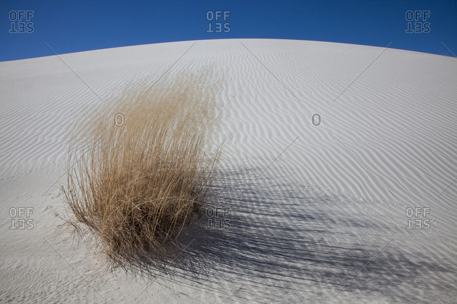 Desert grass on rippled dune in White Sands National Monument