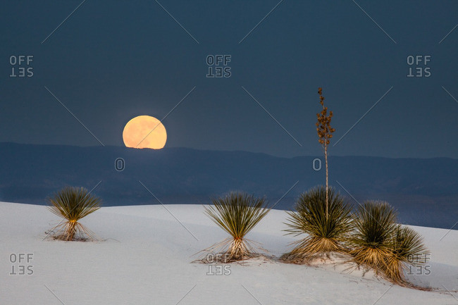 Full moon rising at sunset behind Sacramento Mountains and yucca plants in White Sands National Monument