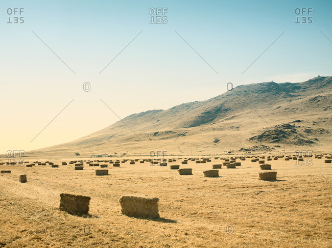Hay bales in a field along the edge of a mountain range