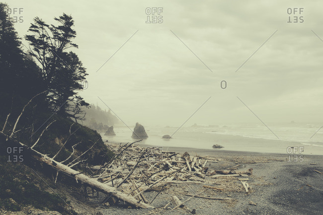 View of coastline from Ruby Beach, piles of driftwood in foreground, Olympic National Park, WA, USA