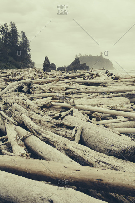 View of coastline from Ruby Beach, piles of driftwood in the foreground Olympic National park
