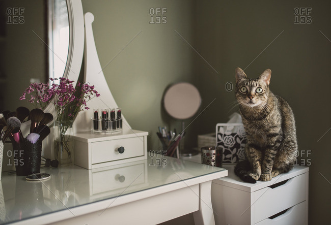 Staring cat sitting on cabinet beside a vanity