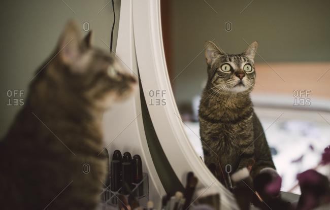 Mirror image of tabby cat sitting on vanity