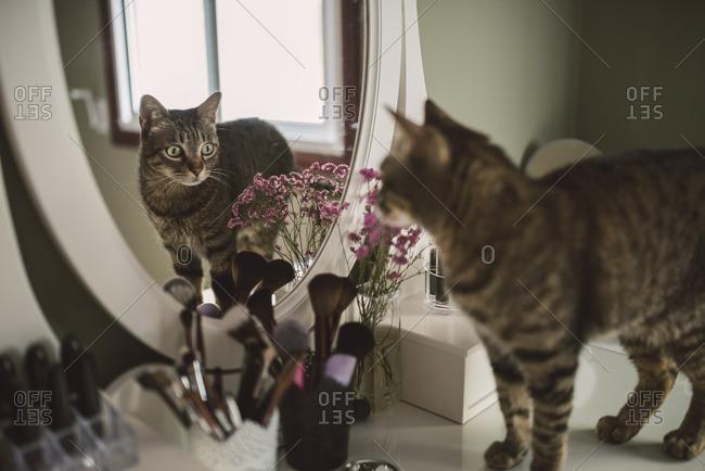 Mirror image of tabby cat standing on vanity