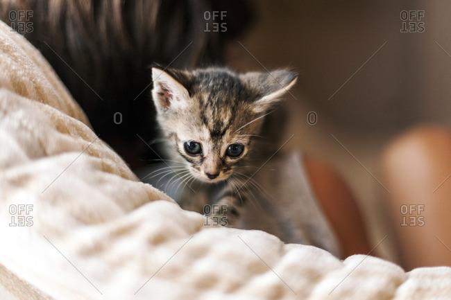 Little boy with tabby kitten