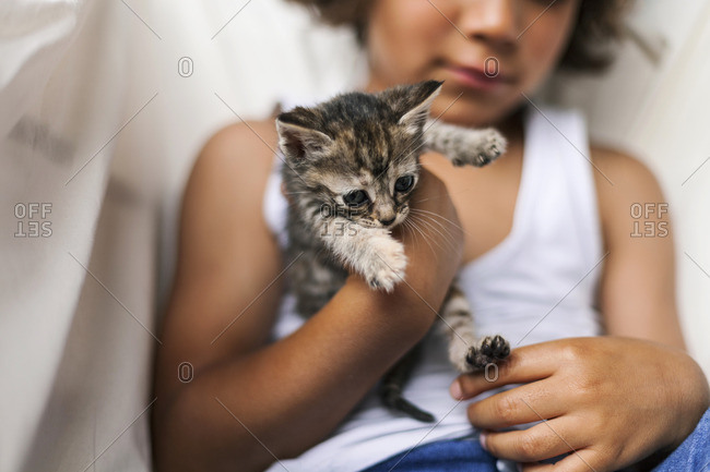 Hands of little boy holding tabby kitten