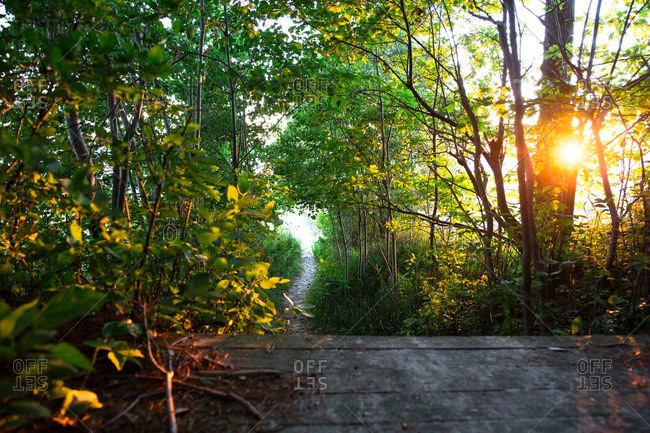 Path leading to a beach in Traverse City, Michigan