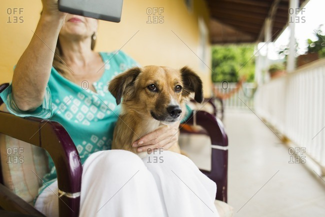 Dog in lap of woman using tablet
