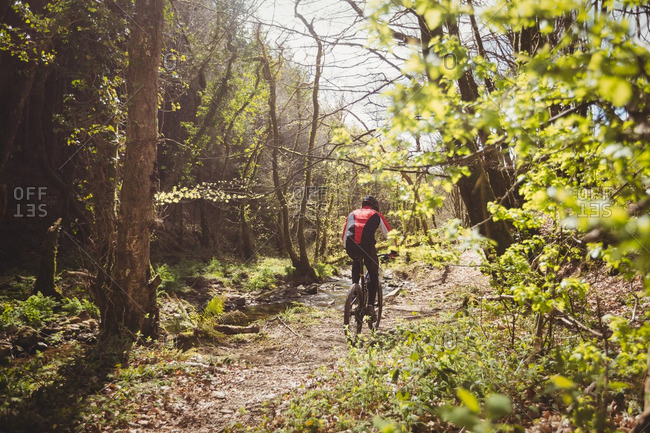 Rear view of mountain biker riding amidst trees in forest