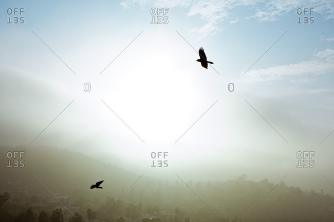 Silhouette of two birds flying in a misty sky at sunrise