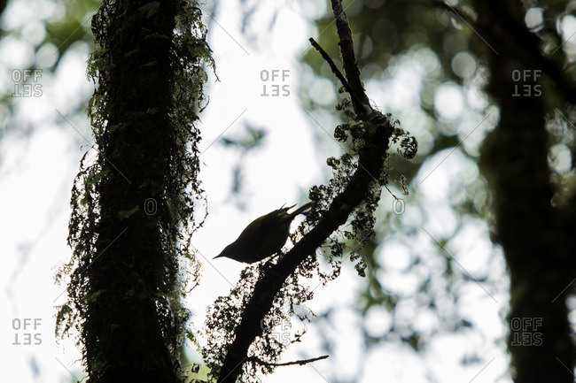 Silhouette of a small bird perched on a tree branch