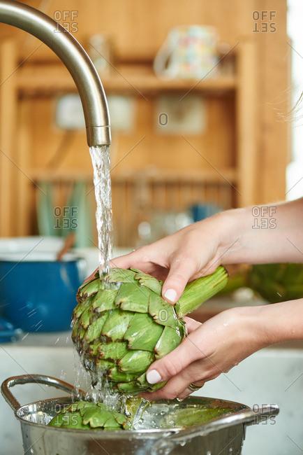 Woman washing a globe artichoke in the kitchen sink