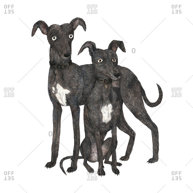 Illustration of two dogs next to each other