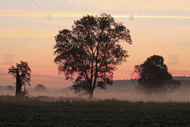 A misty field in morning light