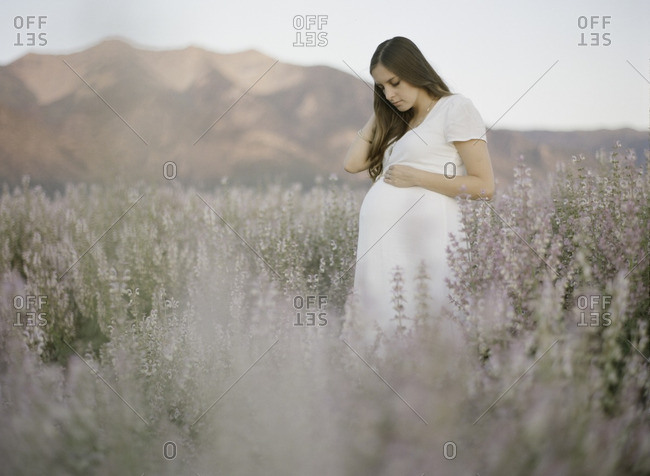 Pregnant woman standing in a field of lavender