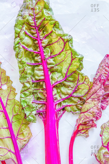 Swiss chard with pink stalk