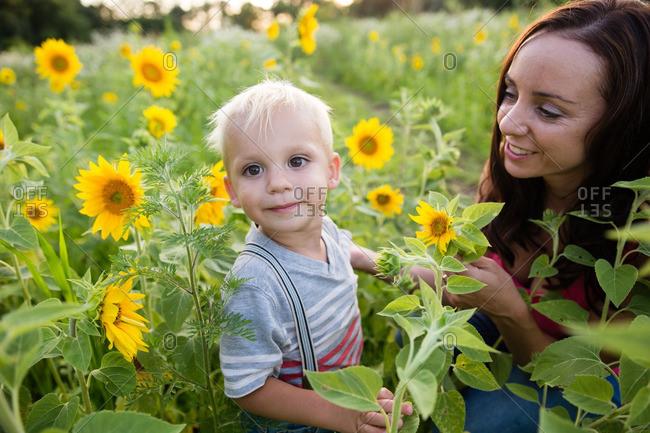 Boy in sunflower field with mom