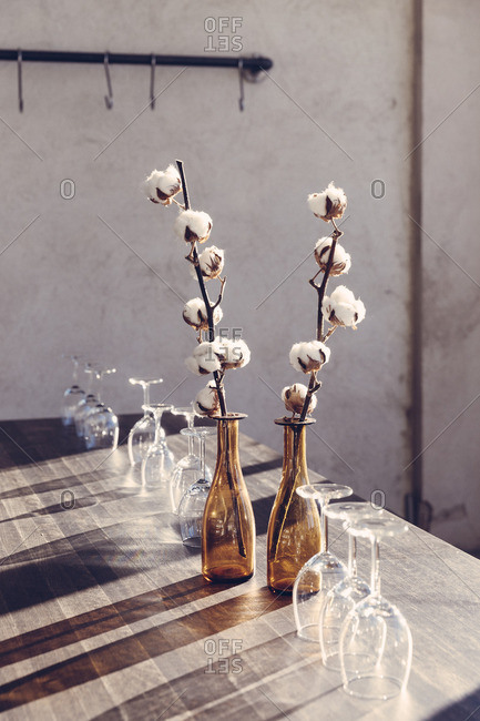 Sweden, Dried cotton plants in bottles on table