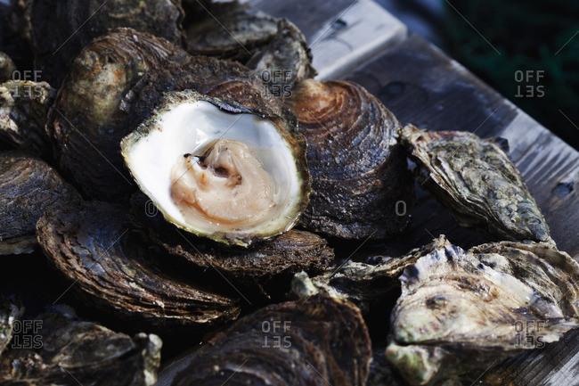 Sweden, Bohuslan, Fresh shellfish
