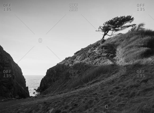 Sweden, Skane, Kullaberg, Tree on sand dunes