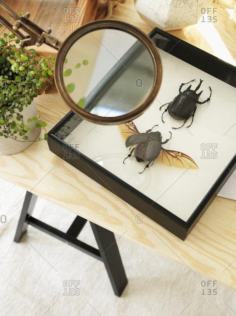 Sweden, Vastergotland, Collection of insects