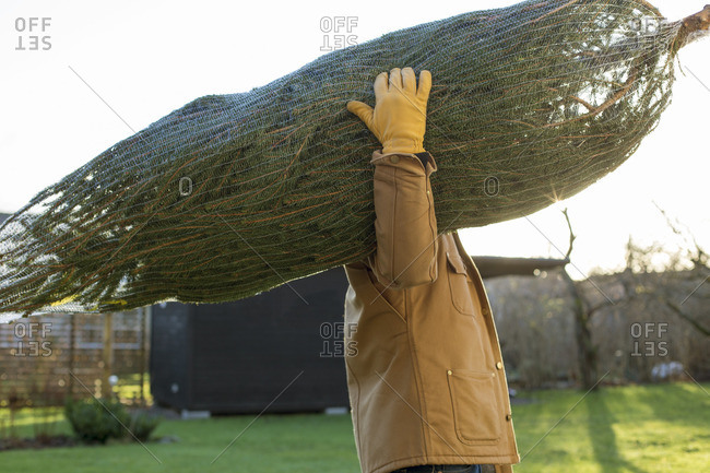Sweden, Vastergotland, Side view of man carrying christmas tree
