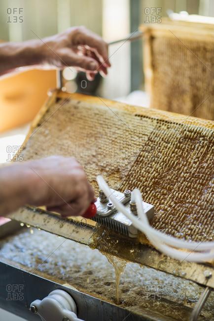 Australia, Queensland, Beekeeper�s hands collecting honey from honeycomb