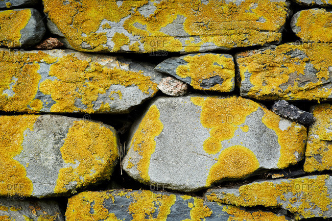 Close-up of lichen on a stone wall