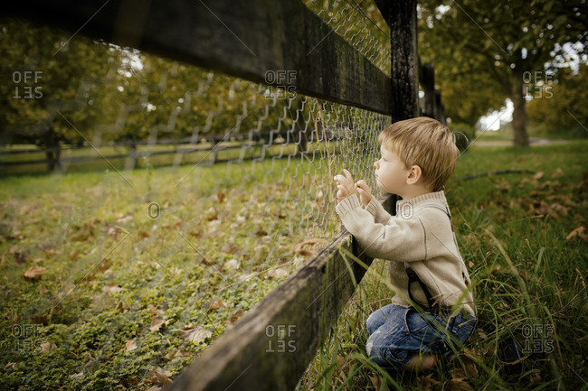 Little boy looking through chicken wire and wooden fence