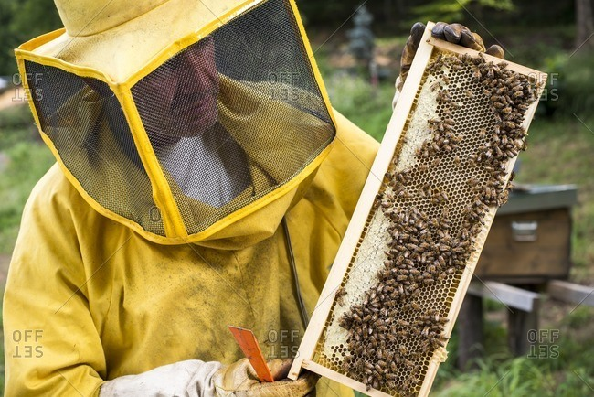 Beekeeper Holding Honeycomb of Bees