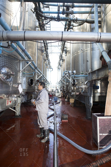 Mature man working in industrial winery