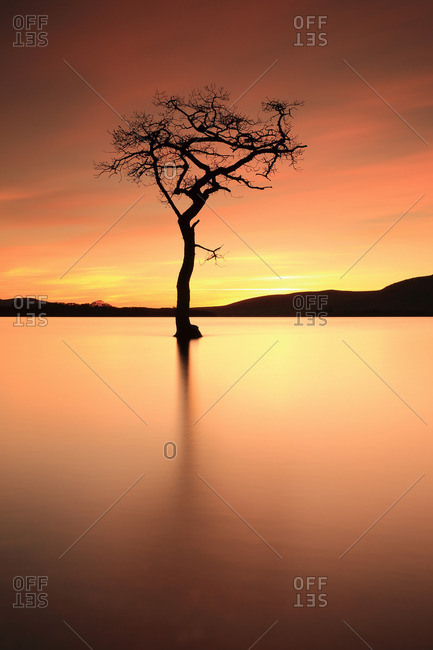 Tree silhouetted at sunset in water