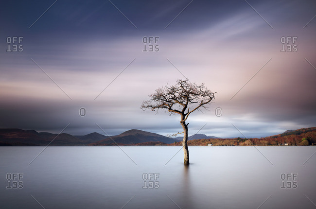 Lone bare tree in a lake at sunset