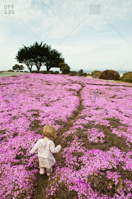 Toddler walking through pink flowers
