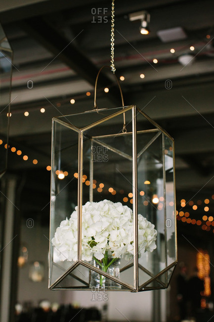 White hydrangea arrangement in hanging glass box