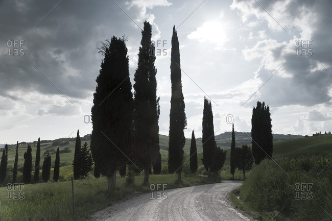 Tuscan cypress trees along a winding road near Pienza, Italy