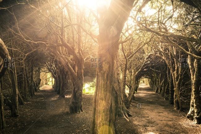 Tree tunnels in a garden in County Meath, Ireland