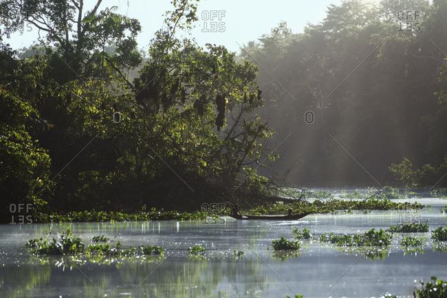 Sunlight falling on river, Orinoco River, Orinoco Delta, Venezuela