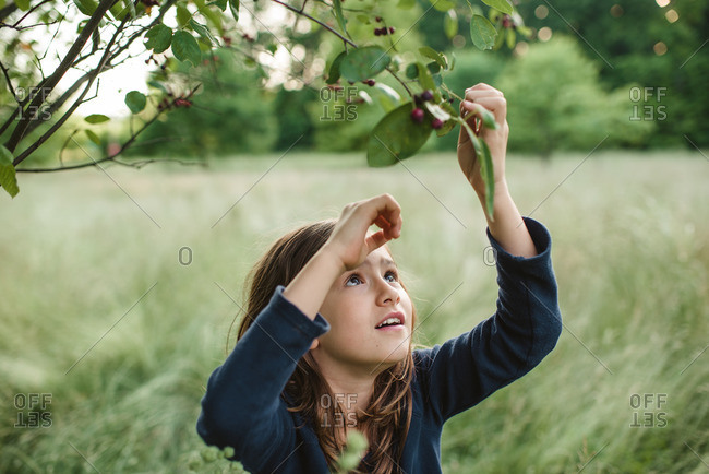 Girl picking berries from a tree in a secluded meadow