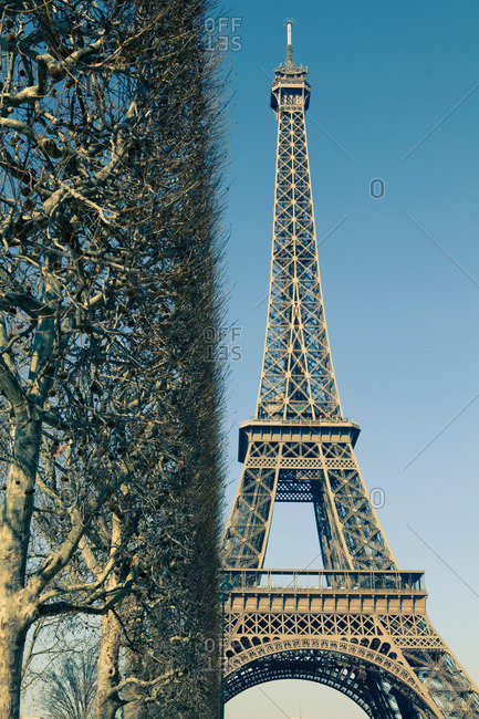Bare trees and Eiffel Tower