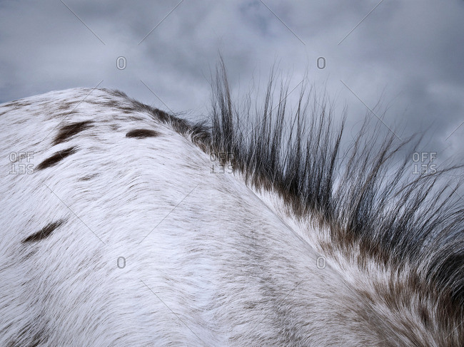 Close up of horse's mane