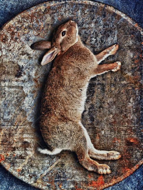 Rabbit in woven basket