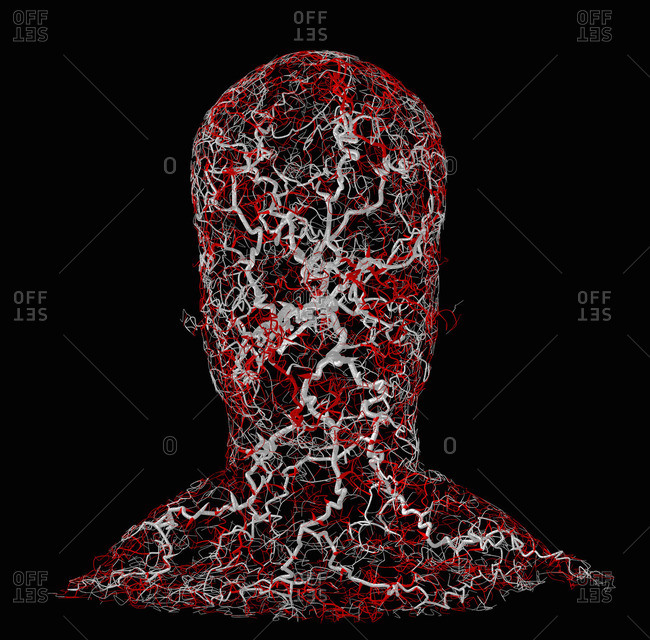 Human head with a fractal system of blood vessels